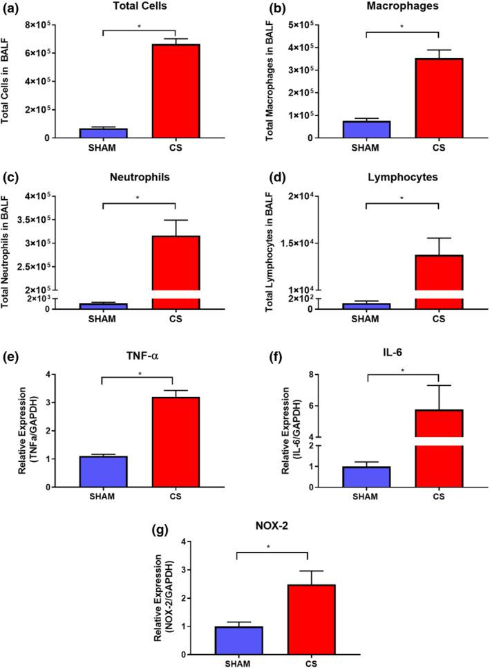 Chronic CS exposure increases BAL fluid cellularity and enhances both lung pro‐inflammatory and oxidative stress mediator gene expression. The lungs of mice exposed to CS were lavaged for the assessment of total cells (a), macrophages (b), neutrophils (c), and lymphocytes (d) ( n = 10). Whole lungs excised from mice were then used to measure mRNA expression by RT‐qPCR of TNFα (e) ( n = 10), <t>IL‐6</t> (f) ( n = 10), and NOX‐2 (g) ( n = 9). Gene expression data are expressed as fold change relative to the sham group. All data are expressed as mean + SEM. * P