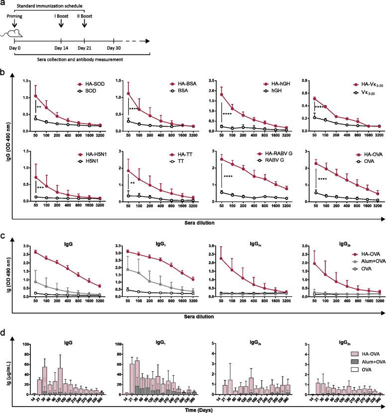 HA-based vaccines stimulate antigen-specific antibody responses in BALB/c mice. a Schematic representation of the standard immunization schedule (priming + two boosters). b Antigen-specific total IgG titer in sera collected on day 30 from BALB/c mice subjected to i.m. immunization with different antigens conjugated to 200 kDa HA or injected alone (standard immunization schedule; BSA, Vк 3-20 , OVA, n = 12; SOD, hGH, TT, RABV G, n = 6; <t>H5N1,</t> n = 4). c Anti-OVA total IgG and IgG subclass titers detected on day 30 in sera of BALB/c mice subjected to i.m. immunization with 10 μg of OVA alone, conjugated to HA, or emulsified with alum following the standard schedule ( n = 10 mice/group; HA vs. alum: P
