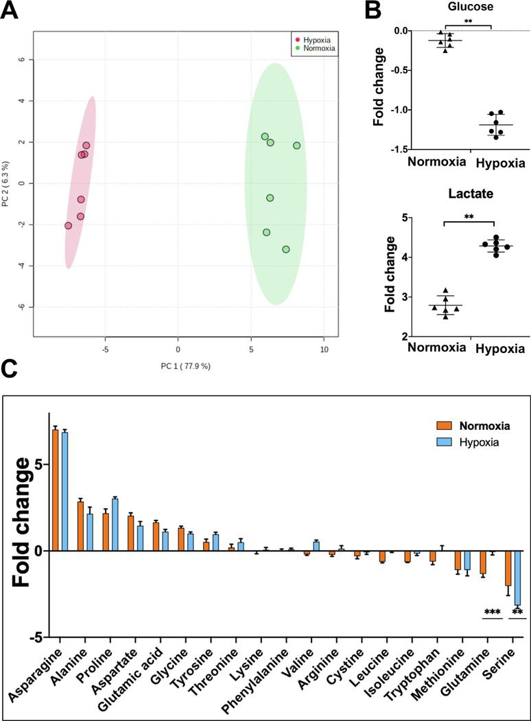 Hypoxia causes a metabolic shift in CD34 + hematopoietic stem and progenitor cells. (A) Principal component analysis of samples on the basis of fold change in metabolites in spent medium relative to fresh medium from CD34 + cell cultures incubated in hypoxia or normoxia. (B) Fold change in glucose and lactate in spent medium relative to fresh medium from CD34 + cell cultures incubated in normoxia or hypoxia. (C) Fold change in amino acids in spent medium relative to fresh medium from CD34 + cell cultures incubated in normoxia or hypoxia. Spent medium was collected on day 4 of culture. Statistical analysis was performed in MetaboAnalyst, and p values ≤ 0.05 were considered significant. * p