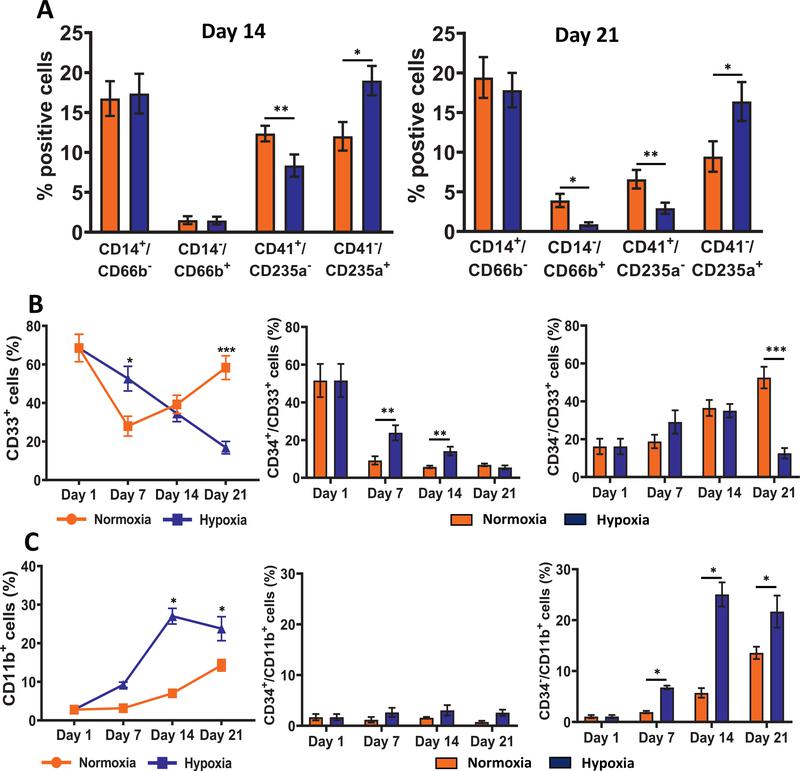 Hypoxia increases erythroid differentiation. (A) Immunophenotypic analysis of lineage cells: monocytes (CD34 − /CD14 + /CD66b − ), granulocytes (CD34 − /CD14 − /CD66b + ), megakaryocytes (CD34 − /CD41a + /CD235a − ), and erythrocytes (CD34 − /CD41a − /CD235a + ) on days 14 and 21. Percentage of positive cells in the CD34 − /Live population are illustrated. (B) Distribution of cells expressing CD33 was determined on days 1, 7, 14, and 21 by flow cytometry. Percentages of total CD33 + , CD34 + /CD33 + , and CD34 − /CD33 + cells in the live population are illustrated. (C) Distribution of cells expressing CD11b was determined on days 1, 7, 14, and 21 by flow cytometry. Percentages of total CD11b + , CD34 + /CD11b + , and CD34 − /CD11b + cells in the live population are illustrated. Data are represented as the mean with standard error ( n = 4). Statistical analysis was performed using the Mann-Whitney test, and p values ≤ 0.05 were considered significant. * p