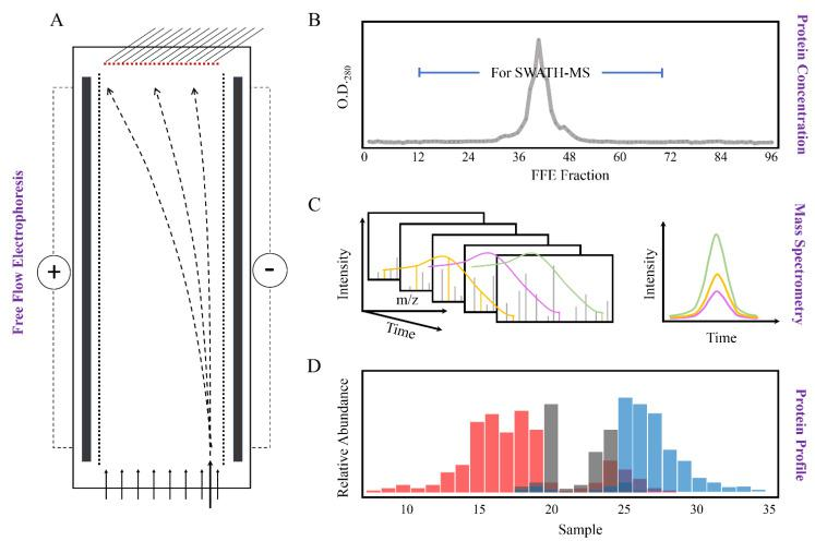 """Schematic overview of sample fractionation by Free Flow Electrophoresis (FFE) and downstream analysis by mass spectrometry. ( A ) Microsomal membranes from M. crystallinum leaf tissue were fractionated by FFE into 96 fractions based on their different net surface charge; ( B ) The absorbance of FFE fractions was determined at 280 nm to identify the range of fractions with positive protein values. Fractions 15 to 70 with positive protein values at O.D. 280 were used for subsequent protein identification; ( C ) Proteins were analyzed by SCIEX TripleTOF 6600 in IDA and SWATH-MS modes for reference library generation, protein identification, and quantification; ( D ) The average protein abundance of three biological replicates of each sample was used for the """"digital western"""" FFE profile generation. Here we use the term digital western to refer to the detection of proteins by MS/MS in specific FFE fractions, similar to a traditional Western where proteins in the wells of a gel are detected by antibodies. Different colored columns indicate different subcellular membrane origins based on marker protein profiles."""