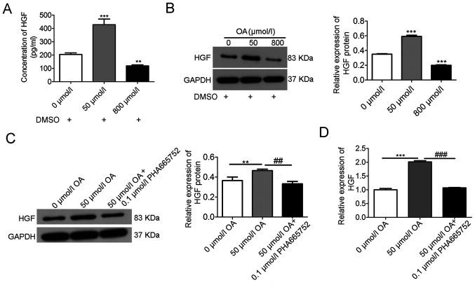 Effects of OA on the expression of <t>HGF</t> in A7r5 cells. (A) <t>ELISA</t> results at 24 h identified that low concentrations of OA (50 µmol/l) upregulated the level of HGF, but HGF was downregulated at high concentrations (800 µmol/l) of OA. (B) Western blot analysis at 24 h demonstrated that low concentrations of OA (50 µmol/l) increased the expression of HGF, but high concentrations of OA (800 µmol/l) downregulated this expression. (C) Western blot analysis showed that the increased HGF expression at low concentrations of OA (50 µmol/l) was mitigated by PHA665752 (0.1 µmol/l). (D) Reverse transcription-quantitative PCR analysis at 24 h indicated that the increased expression of HGF at low concentrations of OA (50 µmol/l) was mitigated by PHA665752 (0.1 µmol/l). Data are presented as the mean ± SD (n=3). **P