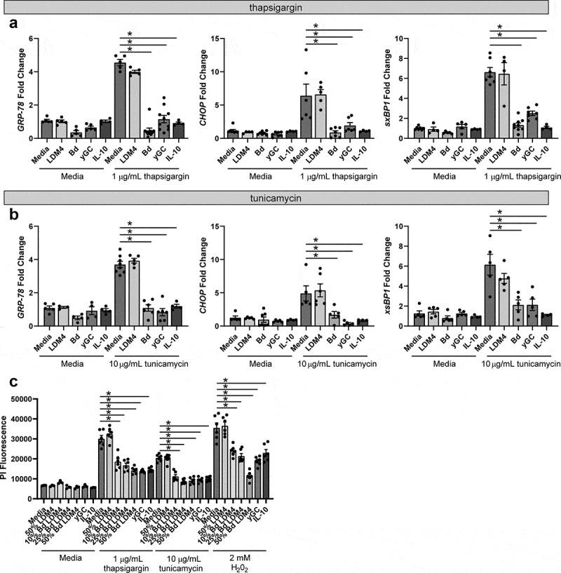 ER stress can be suppressed by B. dentium , γ-glutamylcysteine, and <t>IL-10.</t> a . qPCR analysis of T84 monolayers after 6 hr incubation with or without the ER-stressor thapsigargin. Cells were treated with either media, 50% un-inoculated LDM4 (LDM4), 50% B. dentium LDM4 (Bd), 2 mM γ-glutamylcysteine (yGC), or 100 ng/mL IL-10 (IL-10) (n = 6/experiment). b . qPCR analysis of T84 monolayers after 6 hr incubation with or without the ER-stressor tunicamycin (n = 6/experiment). c . Propidium iodide staining of T84 cells after 48 hr incubation with ER stressors (thapsigargin or tunicamycin) or oxidative stressor hydrogen peroxide (H 2 0 2 ) (n = 6/experiment). *p