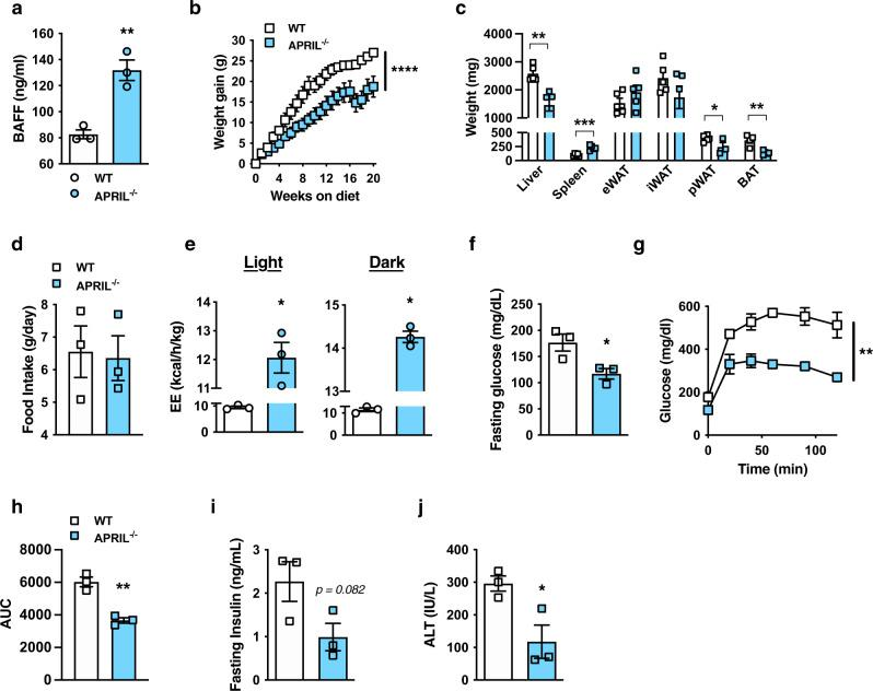 APRIL-deficient mice are protected from obesity development. a – j WT and APRIL −/− mice were fed HFD for 20 weeks. a Systemic BAFF concentration quantified by ELISA. b Weight gain. c Tissue weight distribution as indicated at time of harvest. d Food Intake. e Combined energy expenditure at 16 weeks of HFD analyzed by TSE Phenomaster system. f Fasting glucose at 20 weeks of HFD. g GTT at 14 weeks of HFD. h AUC. i Fasting insulin at 20 weeks of HFD. j Systemic ALT at 20 weeks of HFD. k Weight gain of WT, BAFF −/− , APRIL −/− , or BAFF −/− /APRIL −/− mice fed HFD for 20 weeks. a – j Representative of three independent experiments, n = 6-7/condition. a – j For bar and line graphs, data represent mean ± SEM. a , c – f , i – j Unpaired two-tailed Student's t test. * p