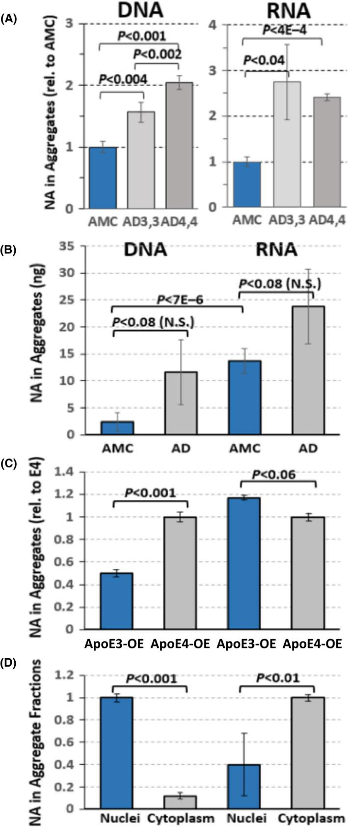 Recovery of <t>DNA</t> and <t>RNA</t> from aggregates. DNA and RNA were extracted and quantified from insoluble aggregates, isolated from hippocampi of AMC (APOE ε3/ε3), or AD (ε3/ε3 or ε4/ε4) individuals (A, each N = 3); or from similar mixes of APOE ε3/ε3 and ε3/ε4 individuals (B, each N = 5–6). (C, D) DNA and RNA were extracted from insoluble aggregates from T98G glioma cells. C, independent cultures of T98G cells overexpressing APOE ε3 from a transgene were compared to cultures expressing ε4. D, T98G cells without any transgene were lysed in 0.5% NP40, and nuclei separated from cytoplasm. DNA was chiefly associated with nuclear aggregates, and RNA with cytoplasmic aggregates, as expected. Means ±SDs are shown. p values reflect 2‐tailed heteroscedastic t tests.