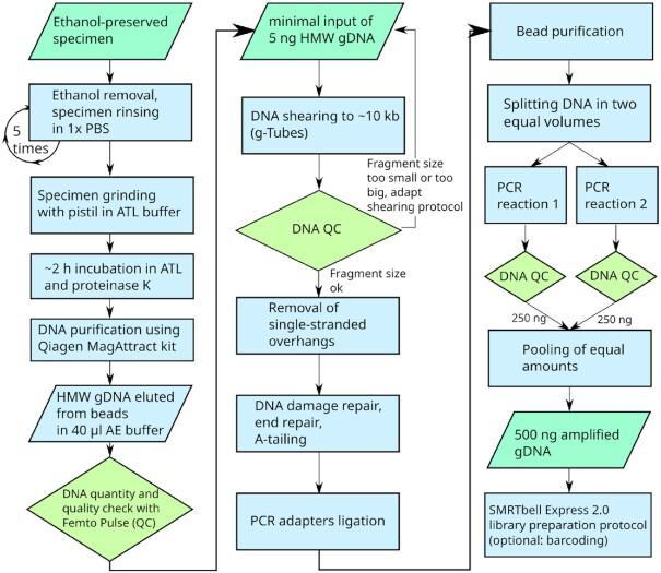 Flow chart of DNA extraction and ultra-low input <t>workflow</t> for SMRTbell Express 2.0 library preparation, for a single ethanol-preserved specimen. gDNA: genomic DNA; QC: quality control.