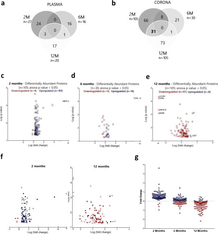 """AD-specific longitudinal proteomic alterations in blood. Proteomic comparison between """"healthy"""" and """"diseased"""" protein coronas at the 2 month (2M), 6 month (6M), and 12 month (12M) time points ( n = 3 biological replicates; n = 3 mice/replicate). MS peak intensities were analyzed using Progenesis LC-MS software (v. 3.0; Nonlinear Dynamics). Only proteins that differed between APP/PS1 and WT mice with a p value"""