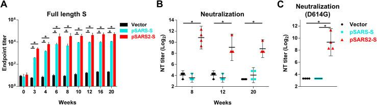 SARS-CoV-2 S DNA vaccine induced long-term humoral immunity and cross-protection against the SARS-CoV-2 with D614G mutation. BALB/c mice (n = 4 per group) were intramuscularly immunized three times at a 3-week interval with 100 μg of vector, pSARS-S or pSARS2-S, followed by electroporation. Serum samples were collected at the indicated time points after the first immunization. (A) Antibodies against the SARS-CoV-2 full-length spike protein were evaluated by ELISA. (B, C) Vaccine-induced neutralizing activity against SARS-CoV-2 with D614 or G614 genotypes was evaluated by neutralization assay. Antibody titers are presented as the mean ± SEM, and neutralization titers are expressed as the geometric mean with a 95% confidence interval. *p