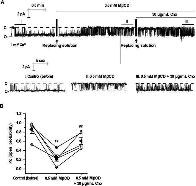 """Application of MβCD to the cytoplasmic bath decreases TRPM4 channel activity which is reversed by exogenous cholesterol. (A) A representative single channel recording from an inside-out patch shows TRPM4 activity before and after replacement of control cytoplasmic bath solution first with a solution containing 0.5 mM MβCD and then with a solution containing 30 μg/ml cholesterol. """"C"""" indicates channel at the closed state. """"O"""" indicates single-level openings. """"I, II, and III"""" are zoom-ins of the single-channel recording. (B) Summary plots of TRPM4 channel P O under each indicted condition. n = 5 paired experiments, ** P"""