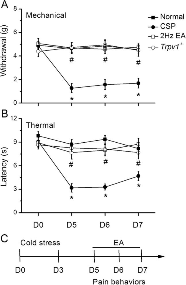 Mechanical withdrawal, thermal latency, and experimental flow in normal, CSP, EA, and Trpv1 −/− mice. A Mechanical threshold from the von Frey tests. B Thermal latency from the Hargreaves' test. C Experimental flow in normal, CSP, EA, and Trpv1 −/− mice. *Indicates statistical significance when compared with the normal group. # Indicates statistical significance when compared with the CSP groups. n = 10 in all groups