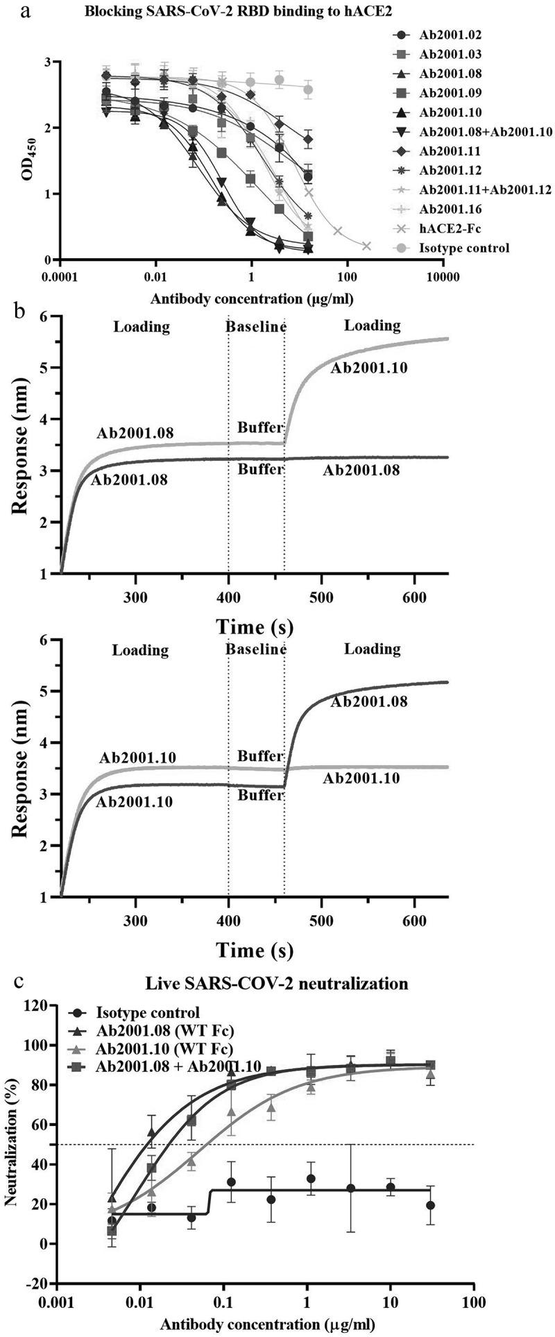 Characterization of potential blocking antibodies. (a) Blocking assay was performed by immobilizing 1 µg/ml hACE2 on a plate. Serially diluted antibodies and biotinylated SARS-CoV-2 RBD protein were added for competitive binding to hACE2. IC 50 values were calculated with Prism V8.0 software using a four-parameter logistic curve fitting approach. (b) Epitope binning was carried out by BLI. Biotinylated SARS-CoV-2 RBD was immobilized onto the SA sensor, and a high concentration of the primary antibody was used to saturate its own binding site. Subsequently, a second antibody was applied to compete for the binding site on the SARS-CoV-2 RBD protein. Data were analyzed with Octet Data Analysis HT 11.0 software. (c) Neutralization activities of Ab2001.08 and Ab2001.10 were assessed by live virus assay. Live SARS-CoV-2 and serially diluted (3-fold) antibodies were added to VERO E6 cells. The PRNT 50 values were determined by plotting the plaque number (neutralization percentage) against the log antibody concentration in Prism V8.0 software