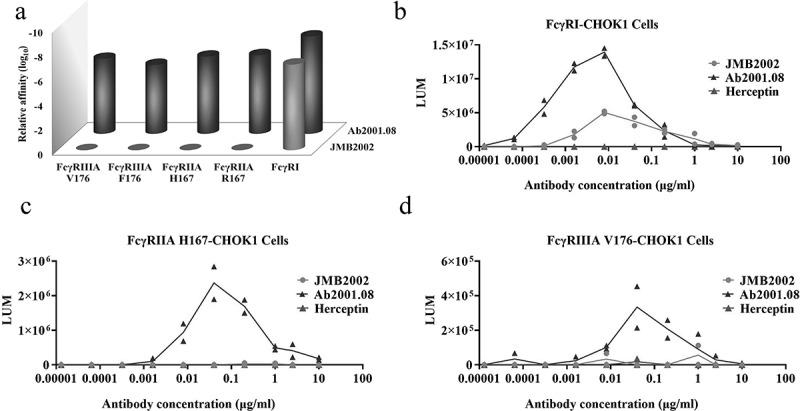 Effects of Fc modification on the ADE activity of JMB2002. (a) Binding of Ab2001.08 and JMB2002 to FcγRs was determined by BLI. His-tagged FcγR was loaded onto the HIS1K sensor, and serially diluted antibodies bound to the receptor on the biosensor. K D values were determined with Octet Data Analysis HT 11.0 software using a 1:1 global fit model. (b-d) ADE activity was measured using a pseudotyped SARS-CoV-2 system containing a luciferase reporter. Pseudotyped viruses were preincubated with serially diluted antibodies for 1 h. The mixture was added to FcγR-expressing cells and incubated at 37°C for 20–28 h. Infection of cells with pseudotyped SARS-CoV-2 was assessed by measuring cell-associated luciferase activity. Trastuzumab was used as the irrelevant IgG control