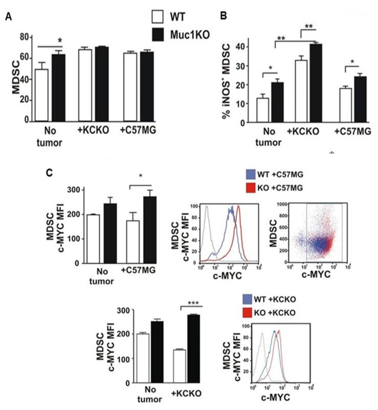 MDSCs from MUC1KO mice produce increased iNOS and c-Myc. ( A ) BM cells from healthy mice were isolated and labeled with antibodies against Gr1 and CD11b. ( B ) Level of iNOS expression by MDSCs from the BM of healthy and tumor bearing mice. Percentages of iNOS + cells on Gr1 + CD11b + BM gated cells. ( C ) MFI values of c-Myc protein expression by MDSCs from the BM of healthy and tumor bearing mice. c-Myc + cells were gated in Gr1 CD11b + cells. Welch's t -test was used to compare between WT and MUC1KO groups and p