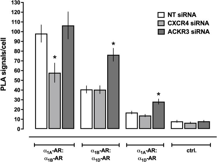 Re-organization of α 1A/B/D -AR heteromers after depletion of CXCR4 or ACKR3 in hVSMCs. Quantification of PLA signals for the detection of receptor-receptor interactions in hVSMCs after incubation with non-targeting (NT) siRNA, CXCR4 siRNA, or ACKR3 siRNA, as in Fig 5 . N = 3 independent experiments with n = 10 images per experiment. *: p