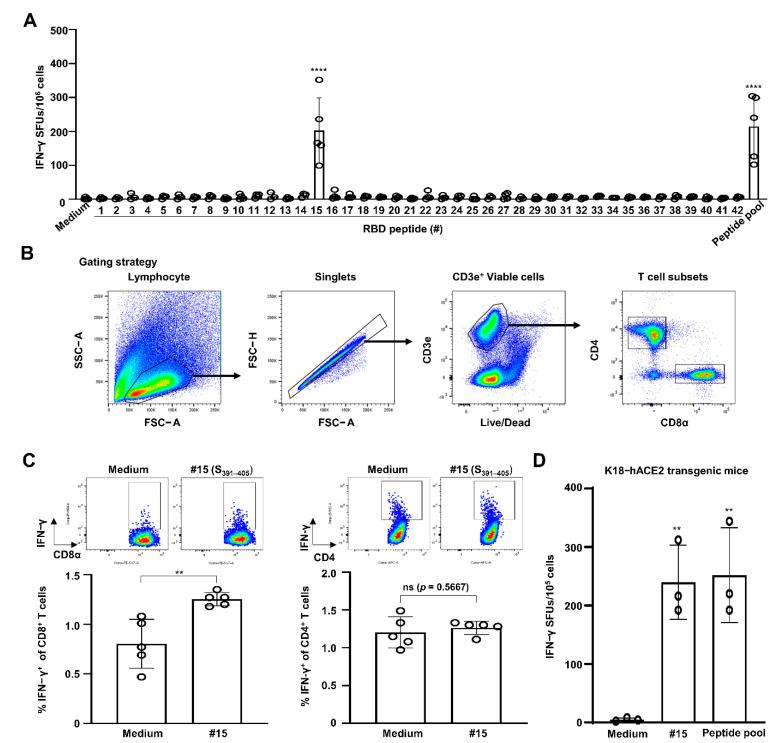 SARS-CoV-2 S 391–405 elicits IFN-γ production by CD8 T cells in splenocytes of SARS-CoV-2 S-RBD protein-immunized C57BL/6 mice. C57BL/6 mice ( n = 5) were immunized i.m. with RBD recombinant protein plus Sigma Adjuvant System (SAS) twice with a two-week interval. One week from the final immunization, cells were harvested from spleens of the immunized mice. ( A ) Splenocytes were simulated with 5 μg/mL of each RBD peptide or a peptide pool (each 2 μg/mL) for 2 days to evaluate CD8 CTL activity via an IFN-γ ELISPOT assay. Statistical significance was analyzed using one-way ANOVA with Tukey's multiple comparison test (F (43, 129) = 12.22, p