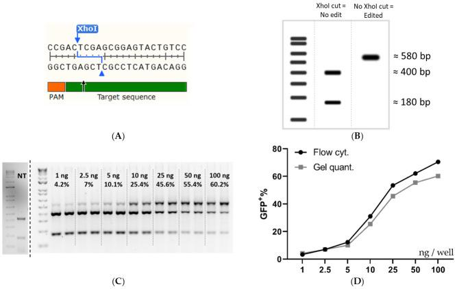 Validation of the flow cytometry data by RFLP analysis. ( A ) The DNA sequence at the Cas9 cleavage site in SL cells. ( B ) Expected RFLP outcome at 0 and 100% XhoI disruption. ( C ) An agarose gel was used for intensity quantification for RFLP analysis of HEK293T SL cells treated with increasing amounts of RNP: PF14 (MR 1:100). The dose of Cas9 per well (ng) and the mean quantified editing is superimposed on the gel image. ( D ) Comparison of a dose titration between flow cytometry quantification and RFLP quantification. Linear y -axis against log 10 x -axis. Flow cytometry quantification was done in triplicate, n = 1. Gel quantification was done in duplicate, n = 1. The cells in ( C , D ) were HEK293T SL cells treated with an increasing dose of Cas9/well (MR 1:100 RNP: PF14, formulated in DMEM/PVA-PEG (5 w/v %)).