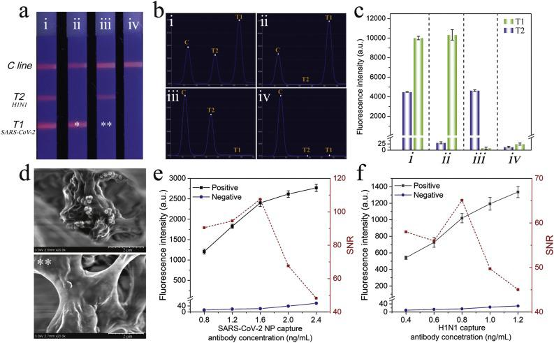 (a) Photograph, (b) corresponding scanning waveforms of fluorescence, (c) fluorescence intensity of SiTQD-based ICA with different concentration of SARS-CoV-2 NP antigen and FluA H1N1: (i) 10 ng/mL, 10 4 pfu/mL; (ii) 10 ng/mL, 0 pfu/mL; (iii) 0 ng/mL, 10 4 pfu/mL; and (iv) 0 ng/mL, 0 pfu/mL. (d) Typical SEM images of the test zone for SARS-CoV-2 NP antigen concentrations of 10 ng/mL (*) and 0 ng/mL (**). Optimization of (e) SARS-CoV-2 NP capture antibody and (f) FluA capture antibody concentration on the T line. The error bars showed standard deviations calculated from three tests.