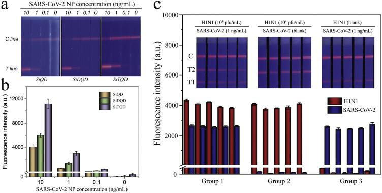 (a) Fluorescence pictures and (b) corresponding test line intensities of the SiQD-ICA, SiDQD-ICA and SiTQD-ICA strips for SARS-CoV-2 NP antigen detection. (c) Reproducibility of the SiTQD-ICA for <t>H1N1</t> and SARS-CoV-2 NP.