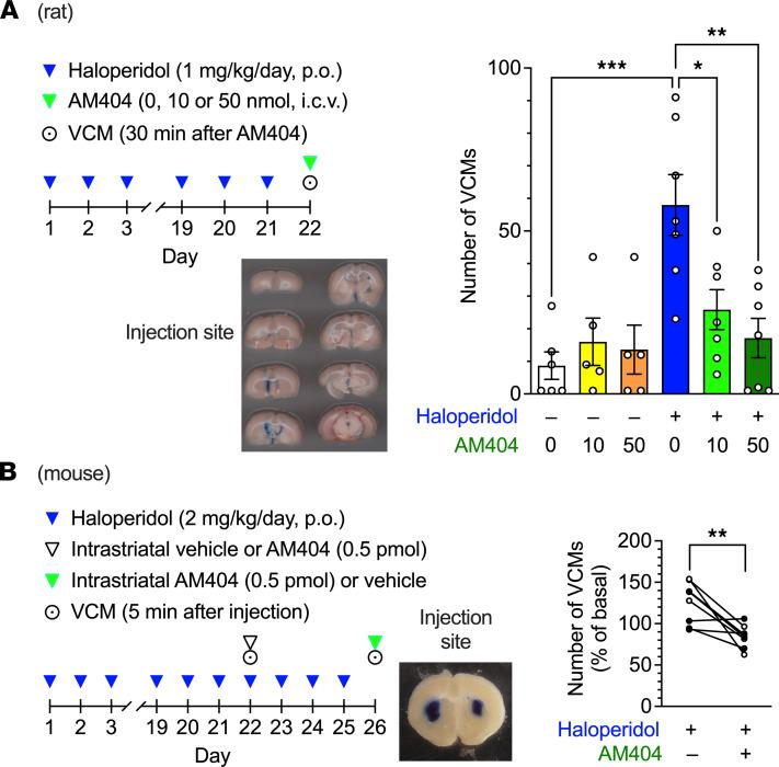 Effects of intracerebral <t>AM404</t> on haloperidol-induced VCMs in rodents. ( A ) Rats ( n = 5–7 per group) were treated daily with oral haloperidol (1 mg/kg/d) for 21 days and received AM404 (0, 10, or 50 nmol) via intracerebroventricular injection at 23 hours after the last administration of haloperidol. The number of VCMs was measured for 3 minutes starting 30 minutes after the administration of AM404. After the experiment, the injection sites were confirmed by injecting Evans blue through the same cannula. A representative image of consecutive coronal sections is shown (43 mm wide in actual size). Individual data are shown with the mean ± SEM. Statistical significance was tested using 1-way ANOVA with post hoc Tukey's test. * P