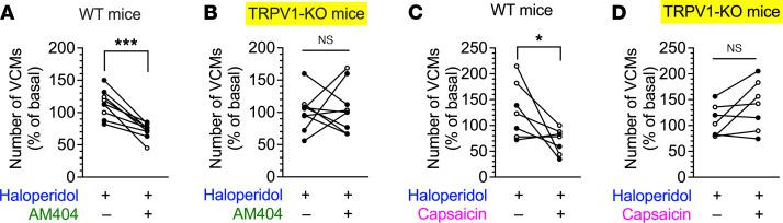 Effects of the dorsal striatal injection of AM404 and capsaicin on haloperidol-induced VCMs in WT and TRPV1-KO mice. WT and TRPV1-KO mice were treated daily with orally administrated haloperidol (2 mg/kg/d) for 21 days. On day 22, after VCMs were counted for 5 minutes as an initial baseline, half of the mice received vehicle (group 1), and the rest received AM404 (1 pmol/side) or capsaicin (10 ng/side) (group 2) through a preimplanted cannula in the dorsal striatum. Five minutes later, the number of VCMs was counted for another 5 minutes to determine the effect of the injected drug. The daily haloperidol treatment was continued for 4 more days; on day 26, the second set of VCM measurements was performed in a crossover design, with AM404 or capsaicin injection in group 1 and vehicle injection in group 2. ( A and B ) Effects of the dorsal striatal injection of AM404 on haloperidol-induced VCMs ( n = 9 per group). ( C and D ) Effects of the dorsal striatal injection of capsaicin on haloperidol-induced VCMs ( n = 7 per group). Changes in the number of VCMs are represented for individual mice on days 22 and 26 as percentages of the baseline VCM count. Open and filled circles indicate the results from groups 1 and 2, respectively. Statistical significance was tested using repeated measures 2-way ANOVA with post hoc multiple comparisons; * P