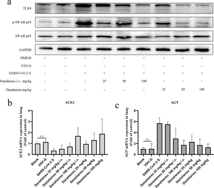 Effects of Danshensu on the protein expression of p-NF-κB p65 and <t>TLR4</t> in SARS-CoV-2 S-induced lung tissues and the mRNA expression of ACE2 and AGT. a Western blotting of proteins involved in TLR4, NF-κB p65 and p-NF-κB p65. b The mRNA level of ACE2. c The mRNA level of AGT. Compared to SARS-CoV-2 S group, * P