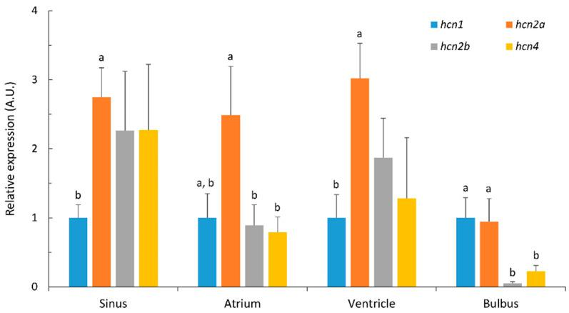 Relative expression levels of hcn1 , hcn2a , hcn2b and hcn4 in sinus, atrium, ventricle and bulbus arteriosus in Atlantic cod. Transcripts were quantified by qPCR, normalized using the geometric average of ubi and eef1 expression and shown as relative values compared to hcn1 transcript levels in each sample. Data are expressed in arbitrary units (A.U.) as mean ± S.E. ( n = 5). Different superscript letters ( a, b ) indicate significant differences in transcript levels between hcn paralogues in each heart region. Differences in hcn transcript levels within each heart area were determined by one-way ANOVA with a Holm–Sidak post hoc test ( p