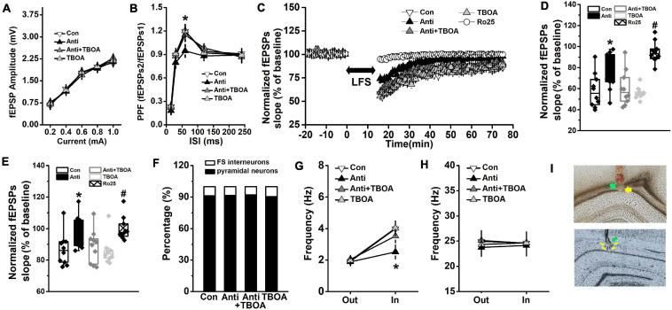 GluN2B-dependent neural function is enhanced by TBOA. The Anti group was bilaterally infused with anti-proBDNF antibody into the CA1 region throughout the whole PD4w, whereas the Con group received the same volume of ACSF. Eight-week-old rats were selected for detecting hippocampal synaptic function in the Schaffer collateral-CA1 pathway immediately following TBOA (Anti+TBOA and TBOA groups), Ro25 (Ro25 group), or ACSF (Con and Anti groups) injection. (A) Input–output curves of fEPSP slopes. (B) PPF, a form of short-term plasticity, was measured and expressed as the ratio of fEPSPs2 to fEPSPs1. (* p