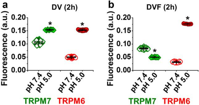 Effect on incubating human cardiomyocytes in acidic solution on the immunofluorescence of TRPM6 and TPRM7. ( a, b ) Quantification of the intensity of fluorescence at pH = 7.4 ( open symbols ) and at pH = 5.0 ( filled symbols ) expressed in arbitrary units (a.u.) with and without divalent cations, respectively. * P