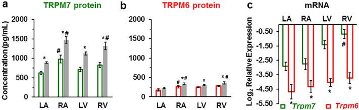 TRPM7 and TRPM6 protein levels and RT-qPCR mRNA relative expression levels in human heart tissue homogenates. ( a, b ) TRPM7 and TRPM6 proteins are increased in the walls of all heart chambers with IHD ( filled columns ) vs. non-IHD ( unfilled columns ). A blinded study-design (with the diagnosis unknown to the investigator) was used for the detection of protein concentration in the various samples. Values (mean ± SEM) are in pg/mL and from 3–33 heart tissue homogenates. * P