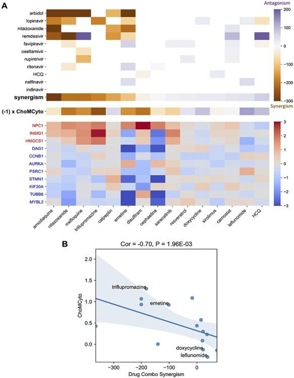 The drug effect on ChoMCyto genes correlates with antiviral synergism. A, heatmaps of synergism effects (top), ChoMCyto score (middle) and ChoMCyto genes expression change (bottom). Heatmaps share drug columns. In the top panel, the row 'Synergism' summarizes the average synergistic effect of antiviral drugs with each host-targeting compound in the x -axis. White: missing values, purple: synergism, orange: antagonism. The middle row illustrates the ChoMCyto scores multiplied by −1, for a better color agreement with 'Synergism'. In the bottom heatmap and gene labels, red indicates upregulation, and blue means downregulation. B, ChoMCyto scores and average synergism effects of repurposed anti-SARS-CoV-2 candidates in a scatter plot. Each dot represents a compound. Spearman R correlation and the P -value (one-tailed) are labeled.