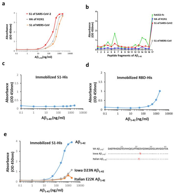 Interactions between Aβ 1-42 and the S1 of SARS-CoV-2. ( a ) Aβ 1-42 differentially binds to the immobilized surface proteins of three viruses responsible for recent pandemics. The order of potency of binding based on the estimated EC 50 was the S1 of SARS-CoV-2 (200–325 ng/mL) > HA of H1N1 (HA, 372–507 ng/mL) > S1 of MERS-CoV (599–860 ng/mL). ( b ) Linear epitope mapping was performed using 17 fragment peptides of Aβ 1-42 (details in Supplementary Figure S2 ), and the binding ability is indicated by OD. Aβ 1-42 interacted with the S1 of SARS-CoV-2, mainly in the last probe containing the hydrophobic Aβ residues of 33–42. A similar binding pattern on Aβ 1-42 was observed for HA of H1N1, and to a lesser extent, for the S1 of MERS-CoV. hACE2-Fc presents three more binding sites (OD > 0.8) across the entire sequence of Aβ 1-42 in addition to a major binding site on the C-terminal end. The following binding potency was compared by OD. ( c ) Aβ 1-40 did not bind to the S1 of SARS-CoV-2. ( d ) Aβ 1-42 bound weakly to the immobilized His-tagged RBD of SARS-CoV-2 as compared to the S1 protein. ( e ) Iowa D23N and Italian E22K Aβ 1-42 mutants exerted marked reduction in the S1 binding, and amino acid sequences for normal human (Wt) and mutated Aβ 1-42 are presented. Data are presented as mean values from two independent experiments.