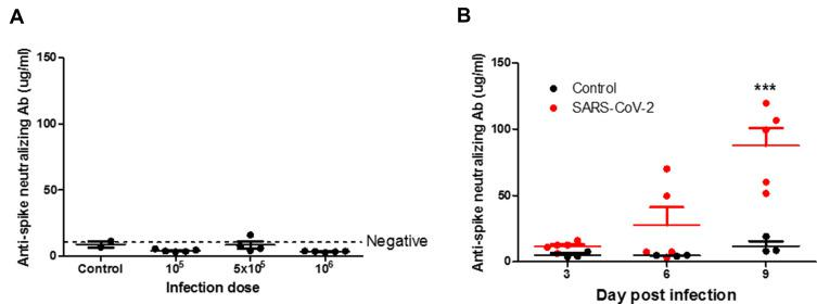 Anti-spike neutralizing antibody in SARS-CoV-2-infected hamsters. ( A ) Syrian hamsters aged 6 to 8 weeks (n=5 for SARS-CoV-2, and n=3 for non-infected control) were infected with 10 5 , 5×10 5 , and 10 6 TCID 50 of SARS-CoV-2 on day 0. Anti-spike neutralizing antibody of plasma was detected by ELISA following the manufacturer's protocol. Differences among groups were determined using one-way ANOVA with a Tukey post hoc test, P > 0.05, no significant among all groups. ( B ) Syrian hamsters aged 6 to 8 weeks (n=5 for SARS-CoV-2, and n=3 for non-infected control) were infected with 5×10 5 TCID 50 of SARS-CoV-2 on days 3, 6, and 9. Anti-spike neutralizing antibody of plasma was detected by ELISA following the manufacturer's protocol. Differences among groups were determined using two-way ANOVA with a Bonferroni post hoc test (*** P