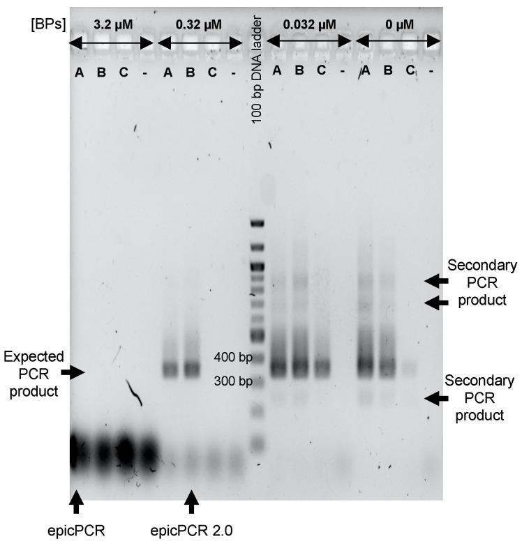 Efficiencies of two- and three-steps epicPCR protocols using different blocking primers (BPs) concentrations. The epicPCRs were run on SXT/R391 carrying bacteria from the Meurthe River water. A and C indicate wells with amplification products from two-steps epicPCR protocols (fusion-PCR on polyacrylamide beads + nested PCR). In the A lane, fusion-PCR products from the first step were used as template DNA in the second step without dilution whereas these products were diluted ten times in line C to circumvent the possible presence of PCR inhibitors. B indicates wells loaded with amplification products resulting from a three-steps epicPCR protocol (fusion PCR on polyacrylamide beads + blocking PCR with BPs as sole primers + nested PCR). The expected size of the final nested-PCR product is around 350 bp (depending on the 16S rRNA gene fragment polymorphism). The conditions of epicPCR as used in Hultman et al. (2018) and that we determined to be the best in our conditions (epicPCR 2.0) are indicated by black arrows. The minus symbols indicate negative controls with epicPCRs run without polyacrylamide beads-template.