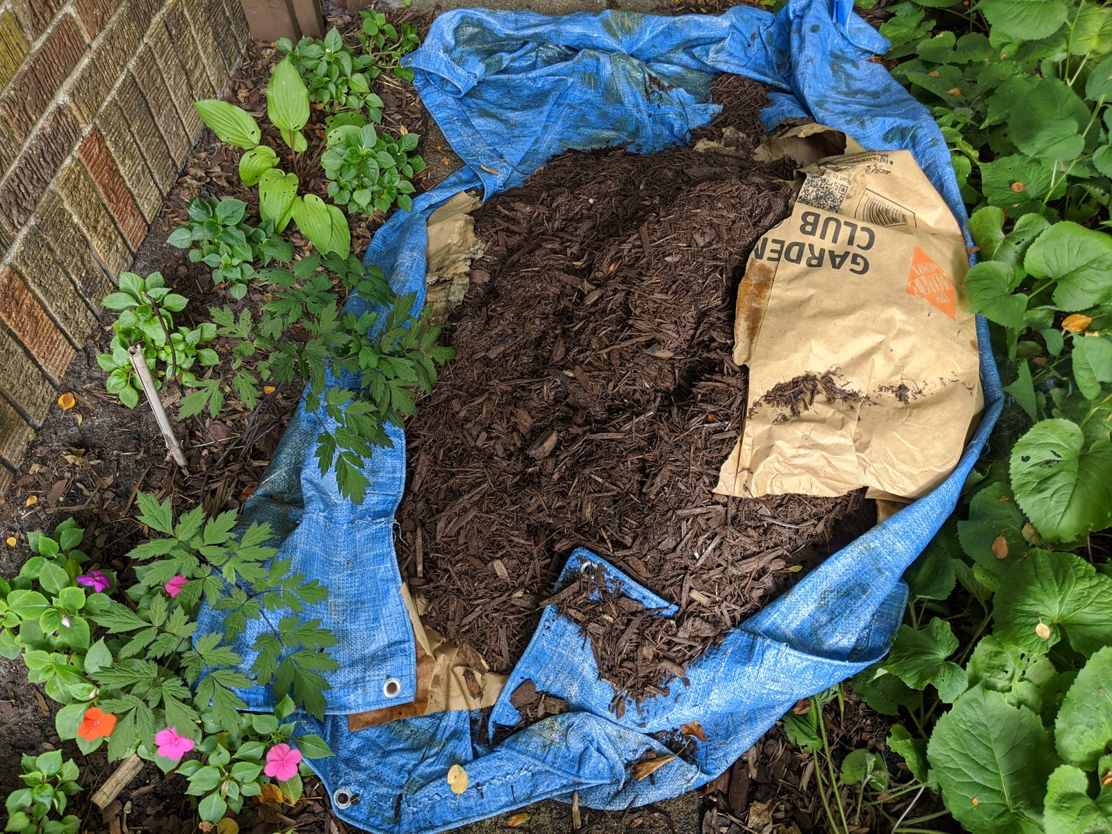Gone from our house at least. Pile of mulch in my in-laws' backyard two weeks later.