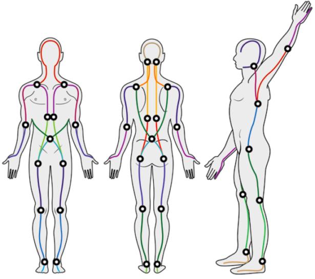 Fascia corps humain