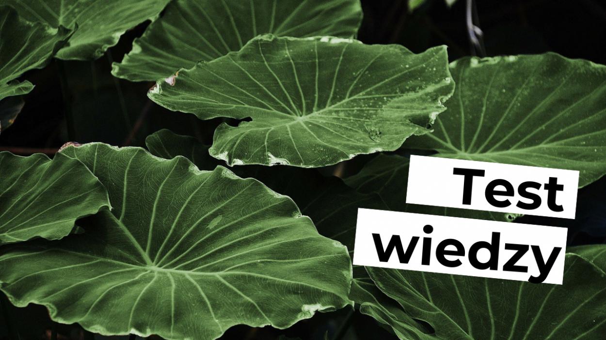 4. Tkanki i organy roślinne