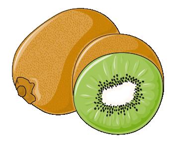 Kiwifruitclipart.png