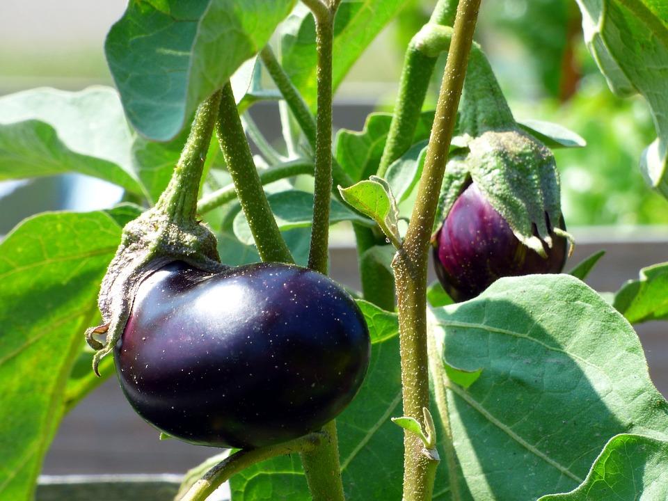 Kitchen-Health-Food-Delicious-Eggplant-Vegetable-3563715.jpg