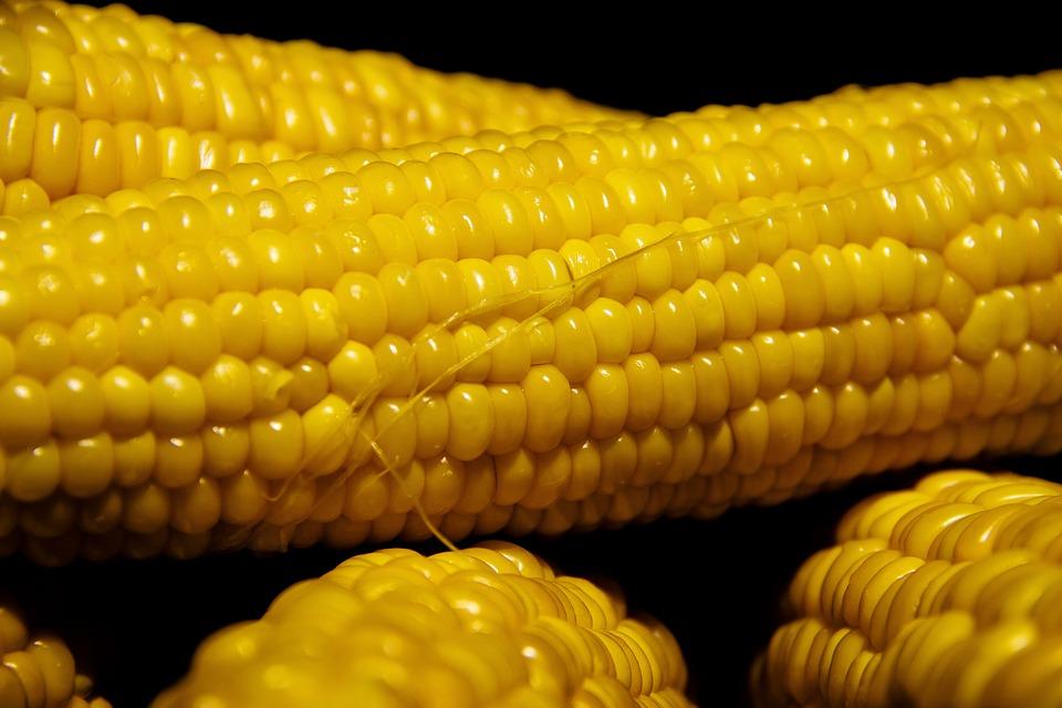 corn-3555307960720.jpg