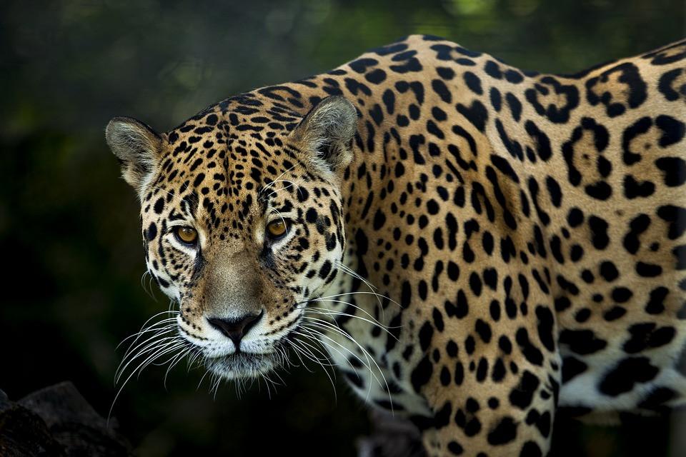 Animais da amazônia.