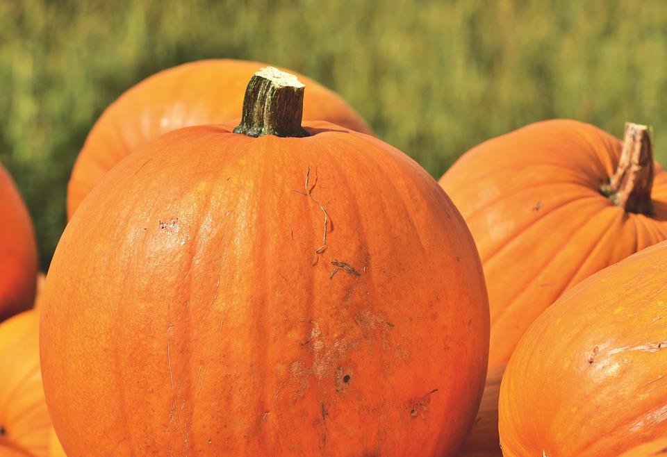 pumpkin-3716993960720.jpg