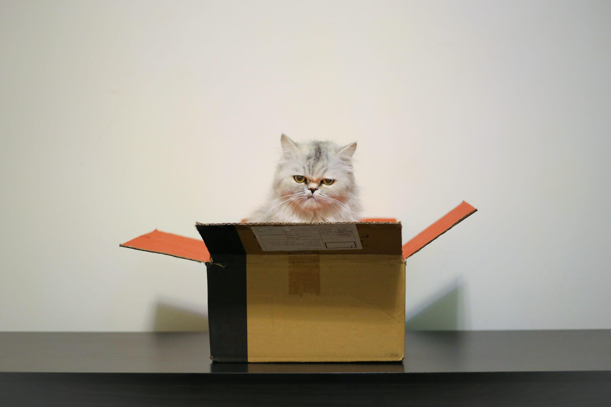 Wysyłka żywych zwierząt kurierem. Które zwierzęta można wysłać w paczce?