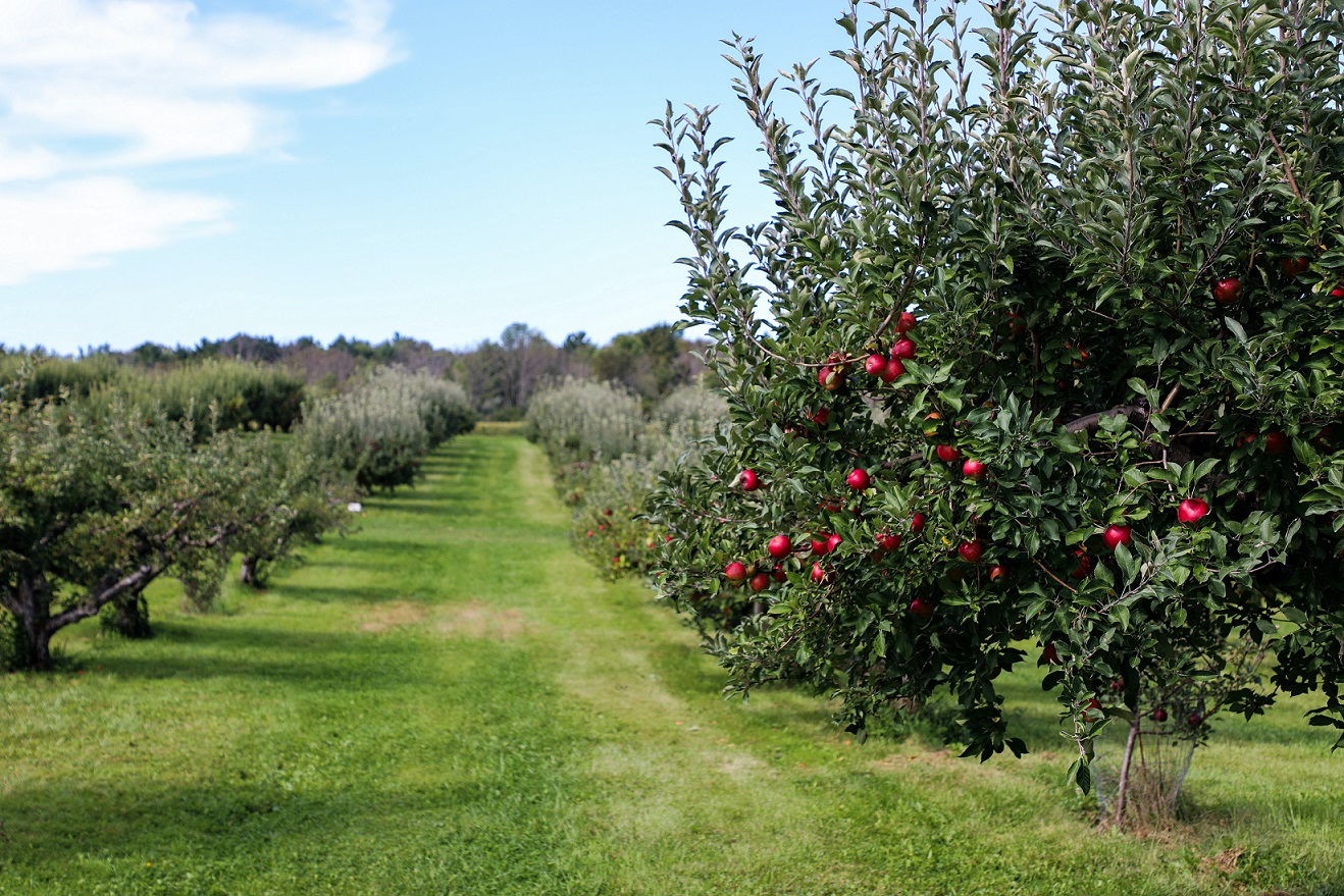Jak wysłać drzewka owocowe kurierem?