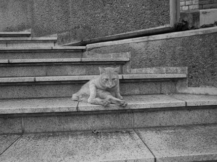 おっさんと猫にゃんが出会った