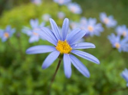 お花撮影で改めてGR Digital4の良さを実感