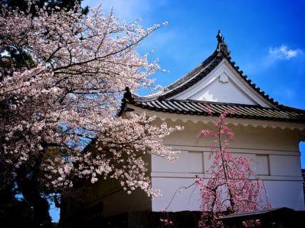 小田原城とTOYO TIRES ターンパイクにて桜花見