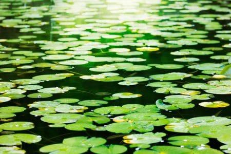 立ち上げ時点での水槽環境について紹介6 ~ 水草・流木編 ~