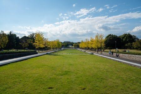 いつぞやの昭和記念公園のコスモス