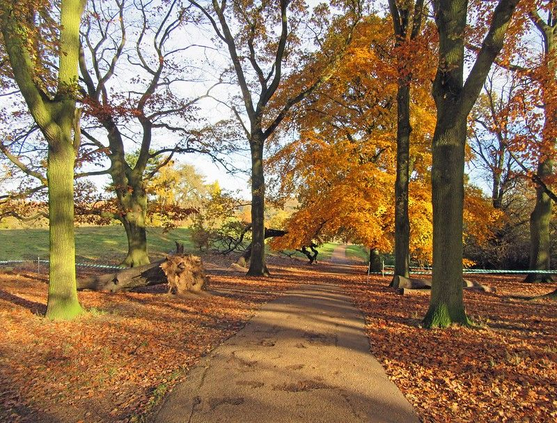 Trees shed their leaves in autumn in a park.jpg