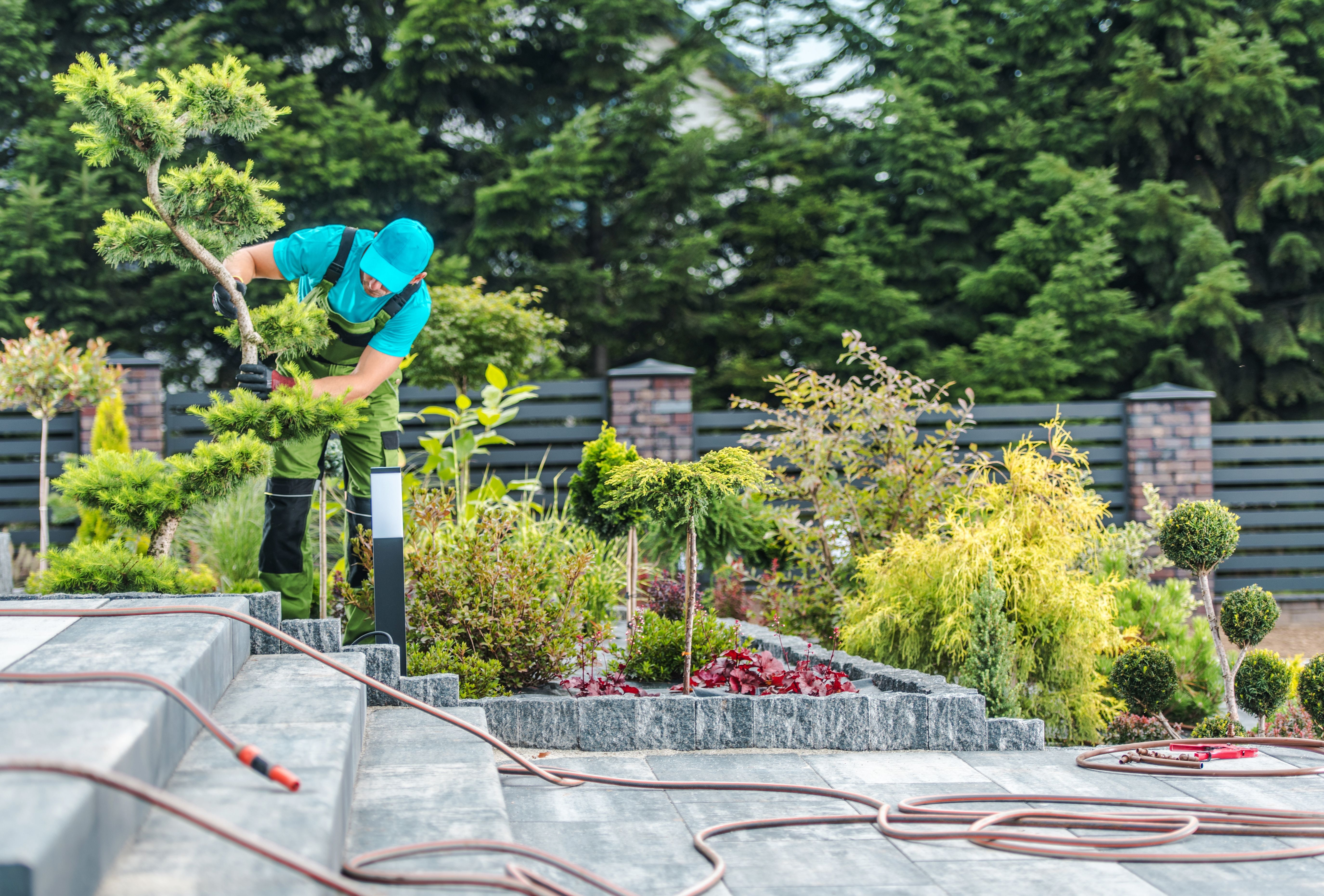 A gardener working in a garden with hose pipes on concrete stairs and a fence and trees in the background